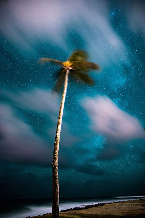 Photo of a palm tree under the starry sky