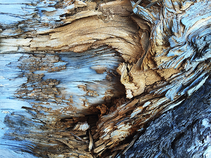 a close up of a textured tree bark