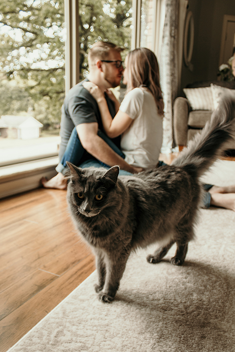 A fluffy grey cat in front of a kissing couple