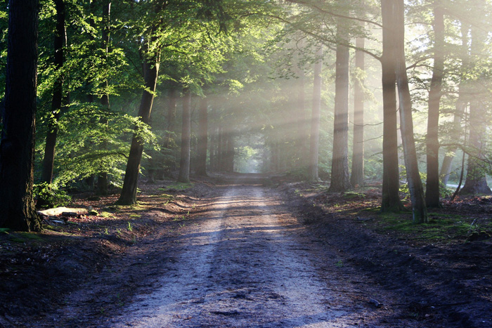 Photo of a forest with light shining through the woods