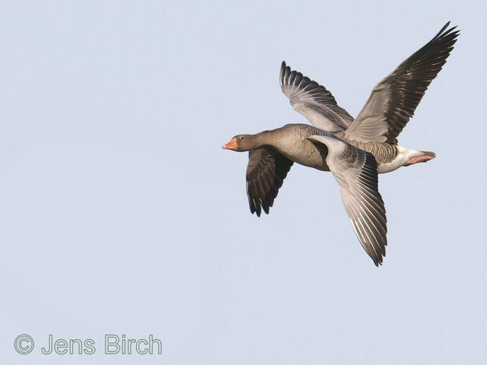 Foto de dos pájaros volando juntos