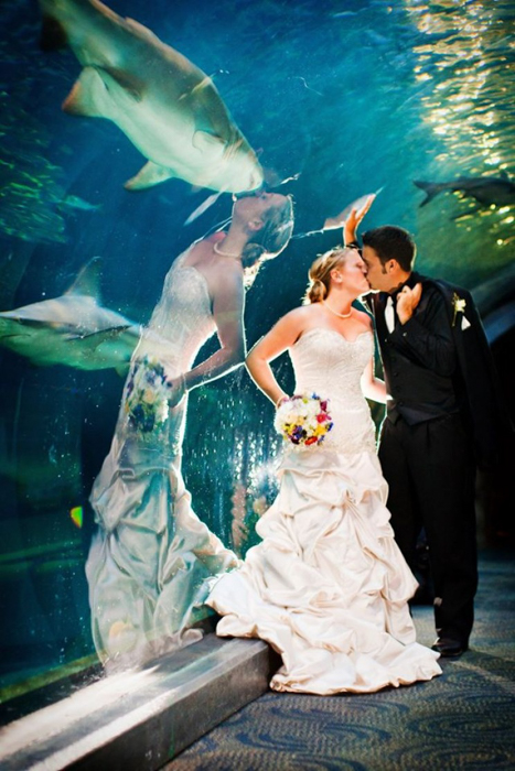 Wedding photo of a couple with a shark swimming above them