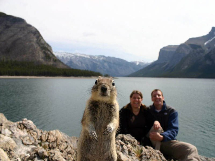 Photo of a couple posing at a lake with a quokka in the foreground