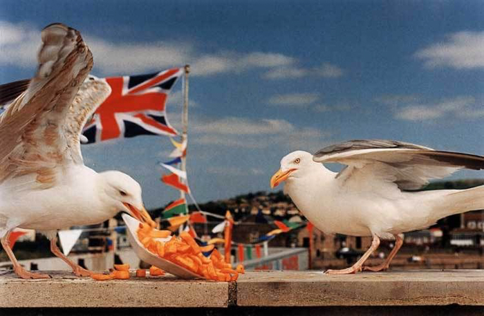 Photo of seagulls stealing food