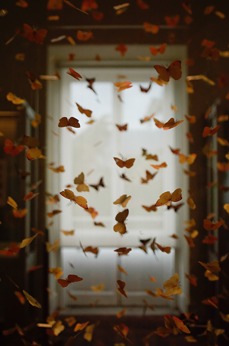 An edited image with falling leaves manipulated to look like butterflies
