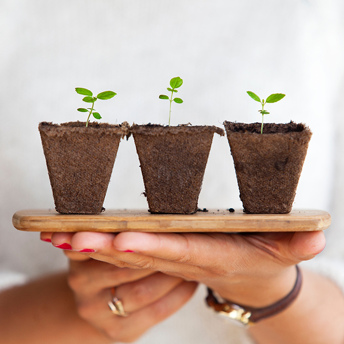 Two hands holding a small tray with three small plants on top