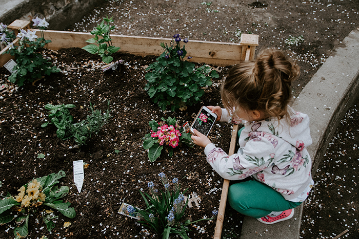 Photo of a little girl taking a photo of a flower with an iPhone