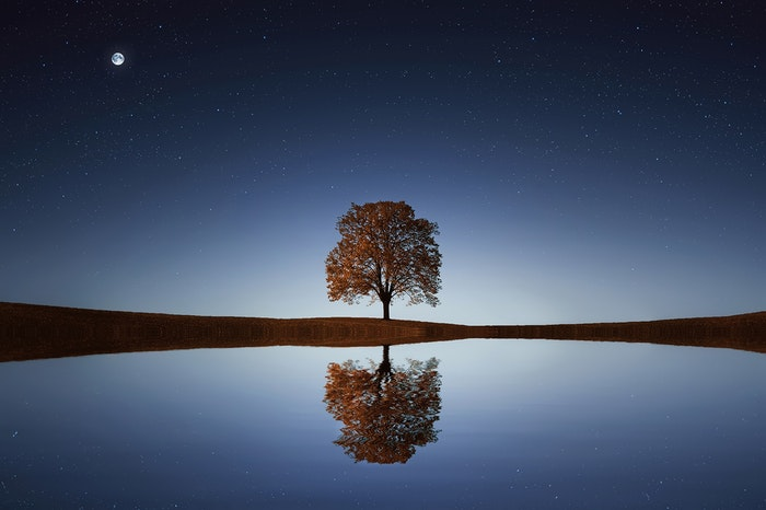 A reflection of a tree in a lake