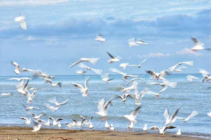 A motion blur image of seagulls on the beach
