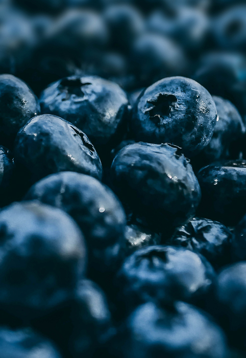 close up photo of a pile of blueberries