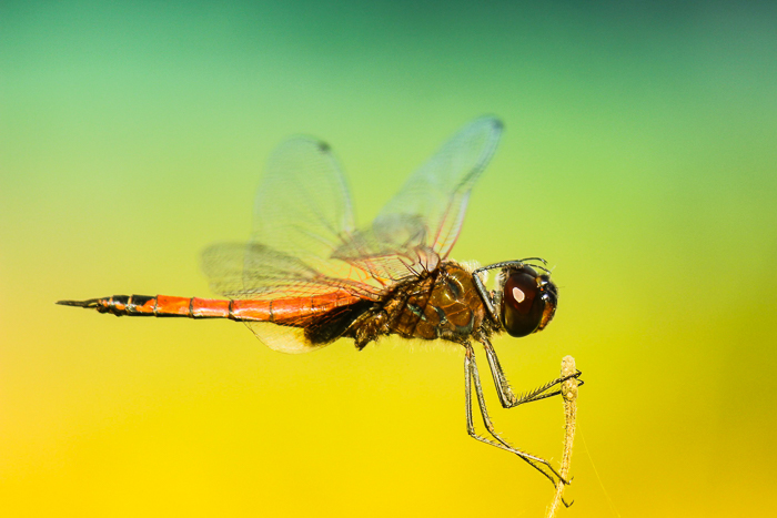 stunning photo of a dragonfly in flight