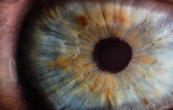 macro photo of an eye