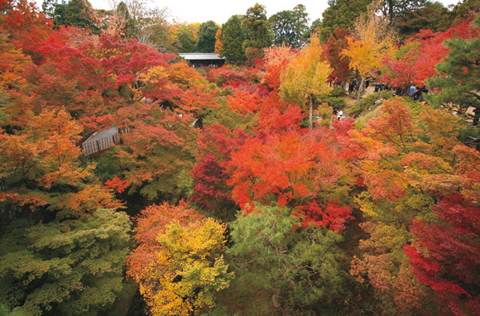 Photo of trees in the Autumn, Autumn Hues color style