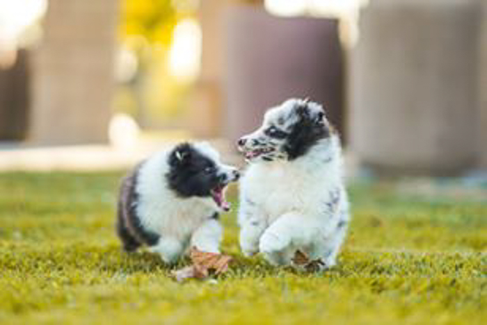 Photo of small puppies