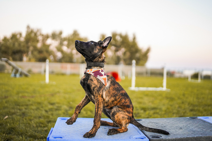 Photo of a dog at a competition