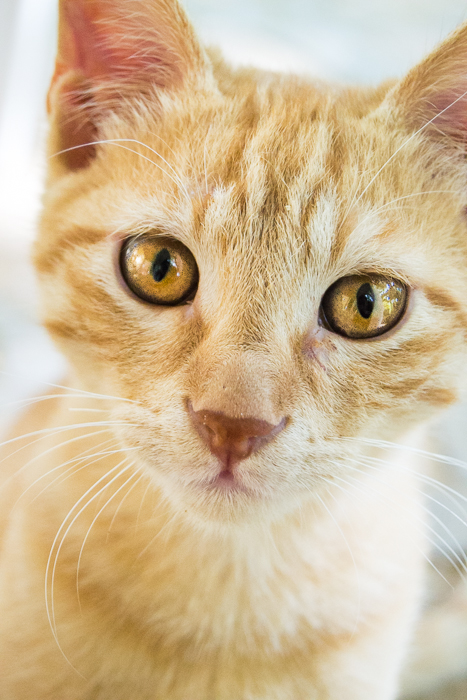 close up of a ginger cat with yellow eyes