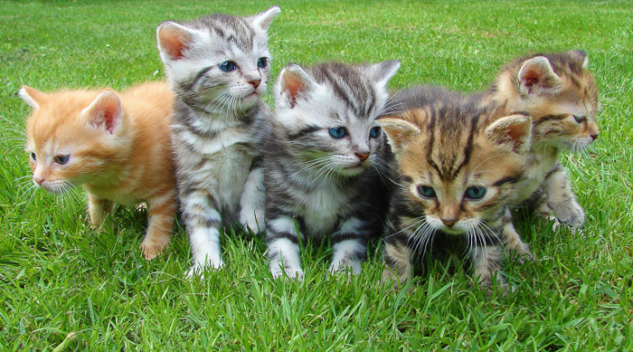 Five cute kittens in a line on the grass
