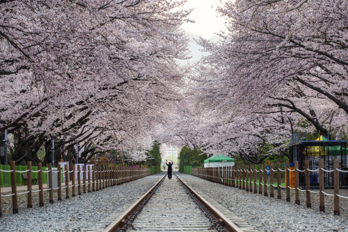 Photo of cherry trees in a park