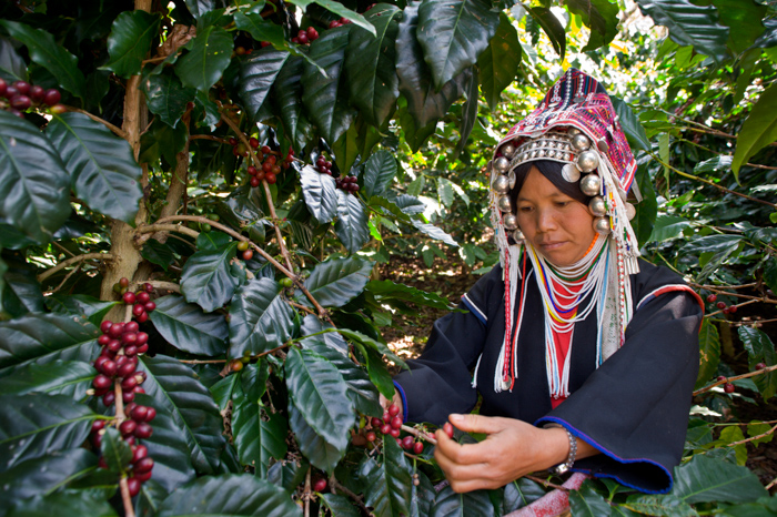 Photo of a woman in a headpiece picking berries