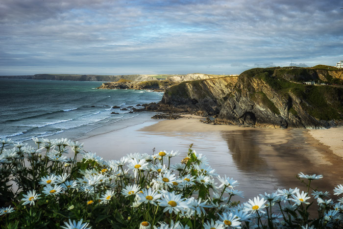 A seaside with cliffs in the background and flowers in the foreground