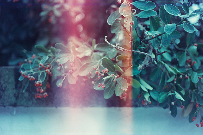Photo of branches with light leaks
