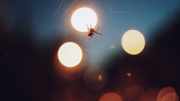 a spider making a web at night