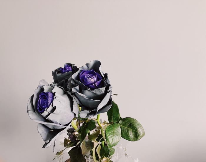 UV photo of roses in purple