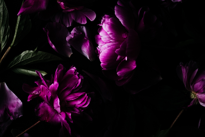 Close-up photo of pink flowers in the dark