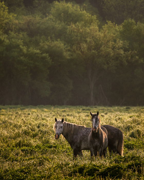 two wild horses in a field