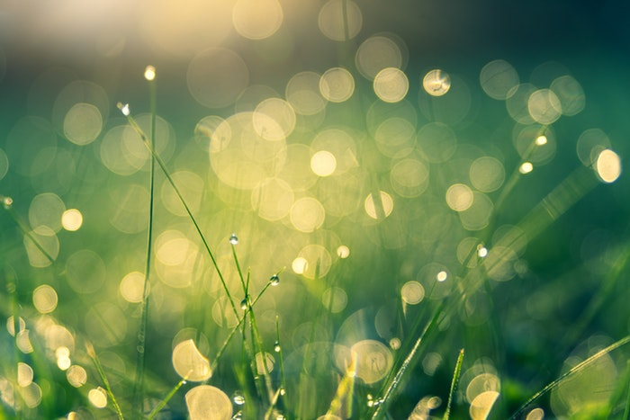 Photo of grass with waterdrops