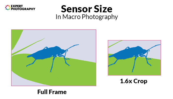 a diagram showing sensor size in macro photography