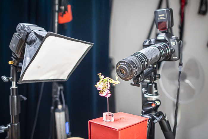 macro photography studio setup