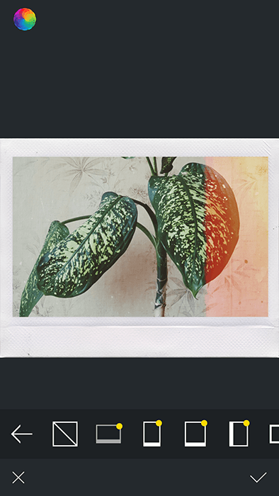 A screenshot of using Afterlight app to edit a photo of a house plant