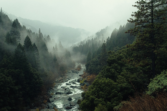 Moody landscape shot of a forest with a river