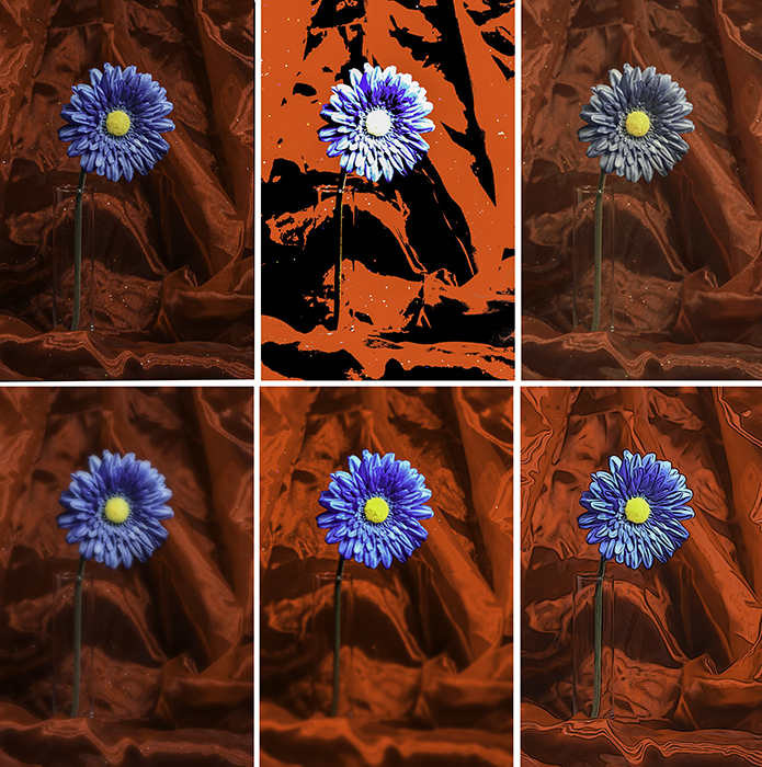 A six photo grid of the same blue flower, highlighting the experimentation photography effects of posterization, retro, soft focus, miniature, and illustration.