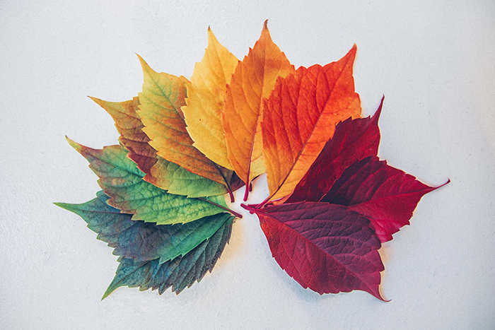 spectrum of different color leafs
