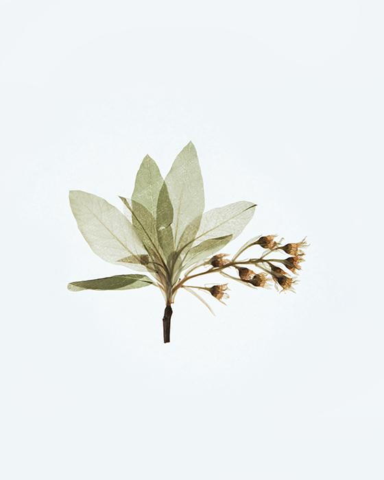 Macro photo of leaves