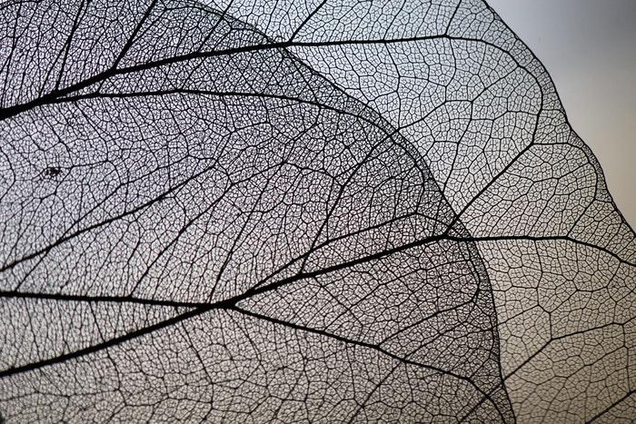 Macro photo of transparent leaves