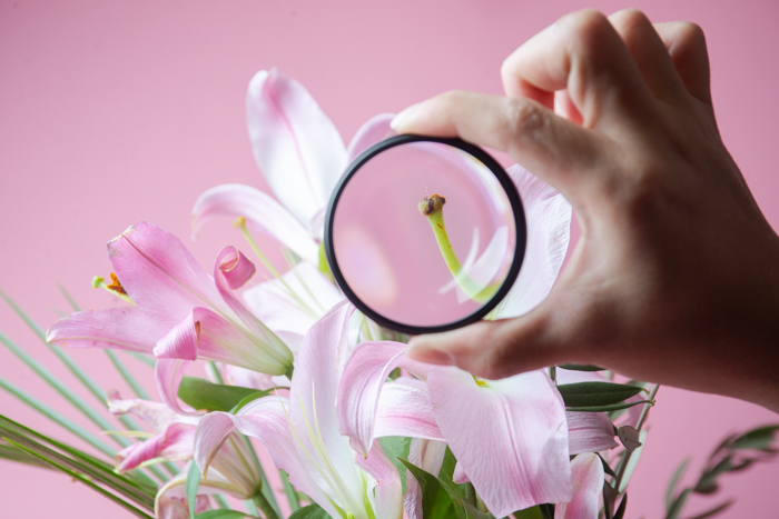A hand holding a macro filter in front of a pink flower