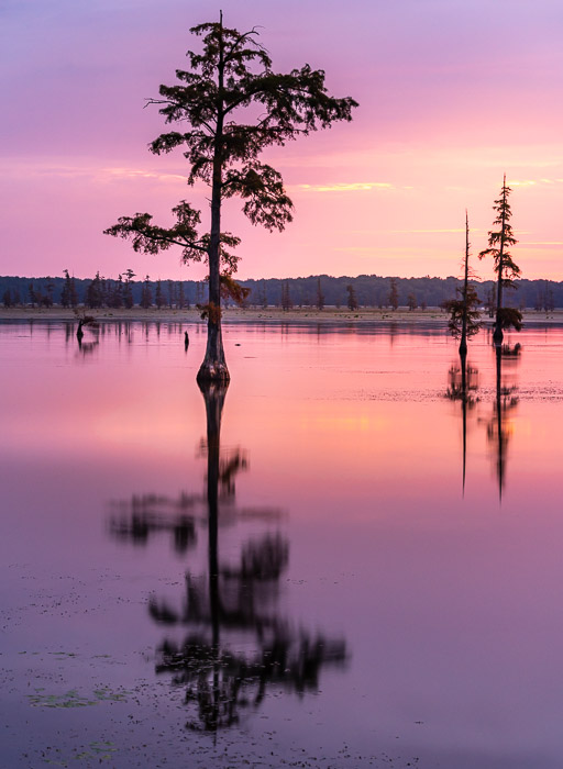 Serene view of trees over a lake at sunset