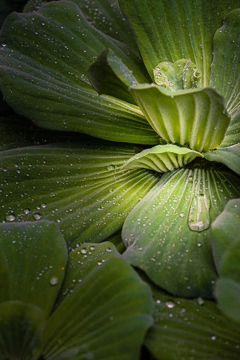 A close up of rain drops on leaves