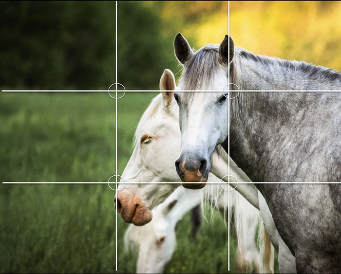 Horses in a field with the rule of thirds composition grid overlayed