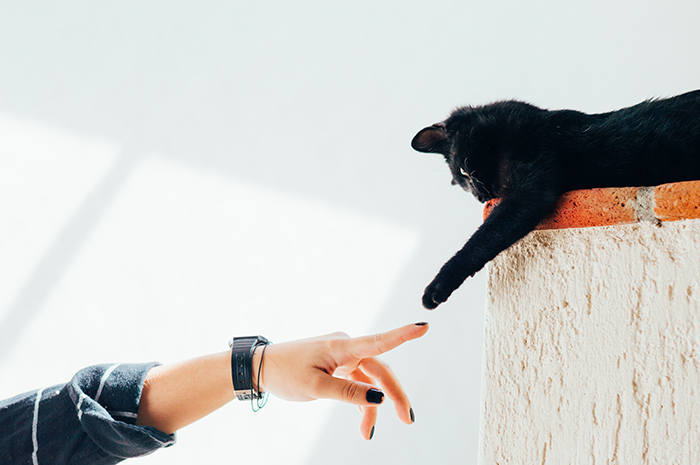 A womans hand touching a black kittens paw