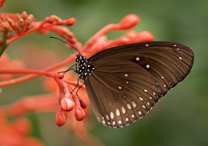 macro photo of a brown butterfly sitting on a flower