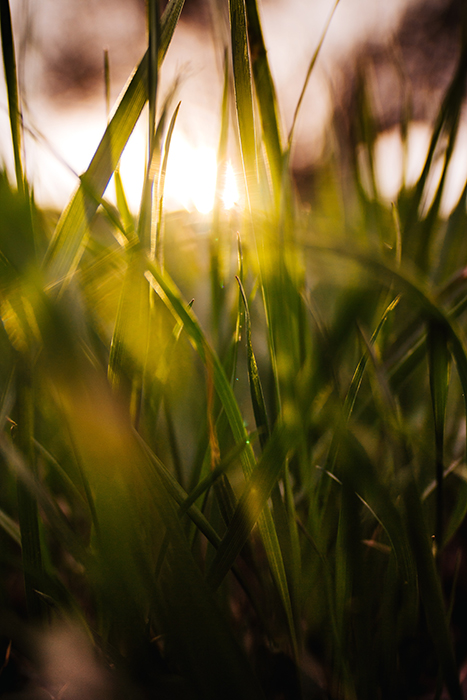 A close up of light shining through blades of grass