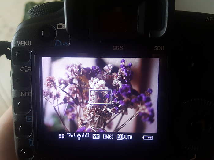 A close up of a DSLR camera shooting a flower with aperture priority mode