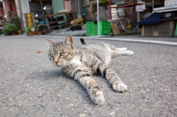 cat laying on the street