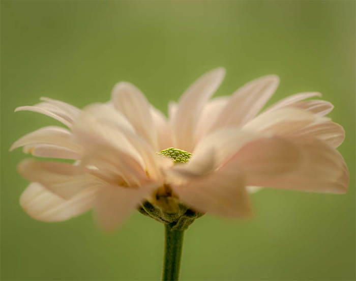 Close-up photo of a white flower