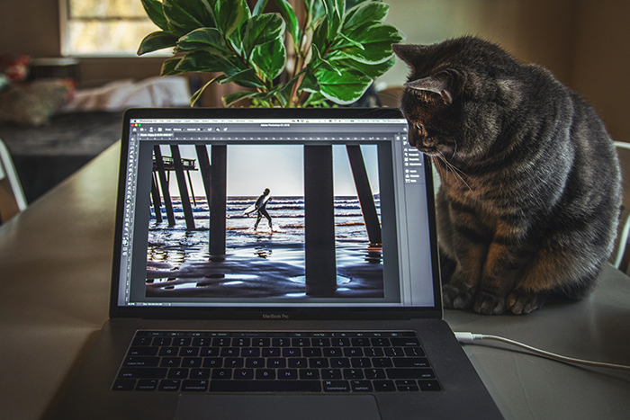 A cat looking at photos on a laptop