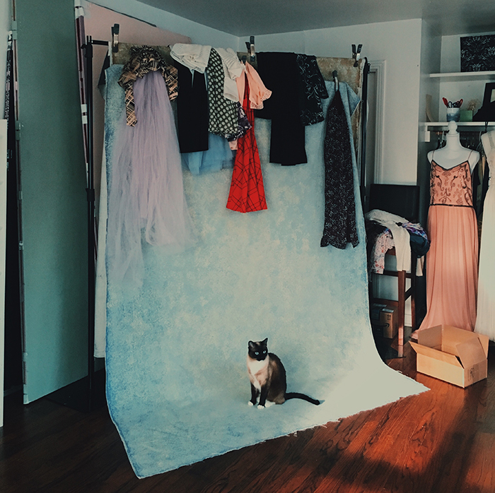 Photography background with a cute little cat.